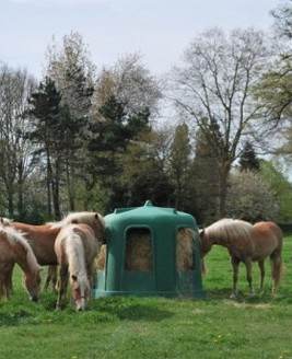 CLoche à foin entourée de chevaux