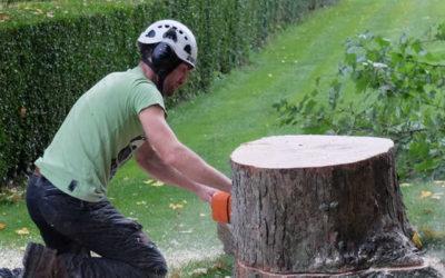 Pourquoi élaguer un arbre ?