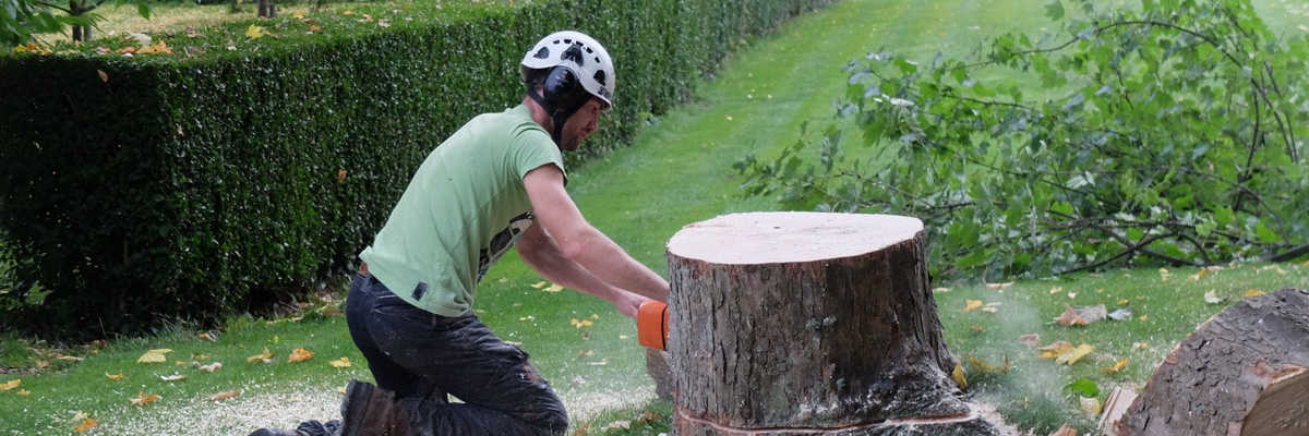 Entreprise d'élagage d'arbre